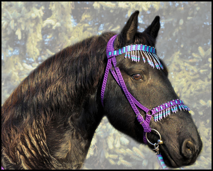 Headstalls For Large Horses Friesian / Large Horse Tack